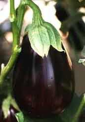 Eggplant is purple. Purple is good.